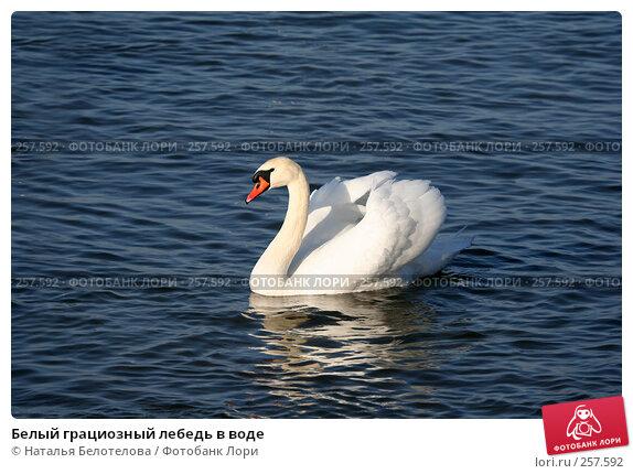 Белый грациозный лебедь в воде, фото № 257592, снято 29 марта 2008 г. (c) Наталья Белотелова / Фотобанк Лори