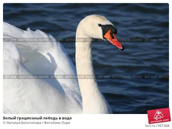 Купить «Белый грациозный лебедь в воде», фото № 257604, снято 29 марта 2008 г. (c) Наталья Белотелова / Фотобанк Лори