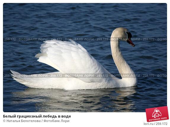 Белый грациозный лебедь в воде, фото № 259172, снято 29 марта 2008 г. (c) Наталья Белотелова / Фотобанк Лори