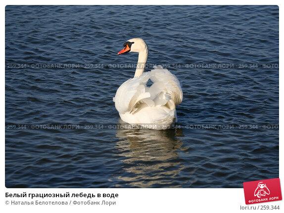 Белый грациозный лебедь в воде, фото № 259344, снято 29 марта 2008 г. (c) Наталья Белотелова / Фотобанк Лори