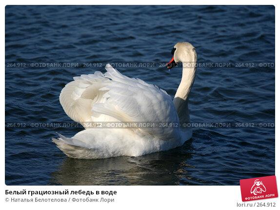 Купить «Белый грациозный лебедь в воде», фото № 264912, снято 29 марта 2008 г. (c) Наталья Белотелова / Фотобанк Лори