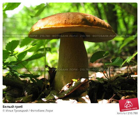 Белый гриб, фото № 210780, снято 10 июня 2006 г. (c) Илья Троицкий / Фотобанк Лори