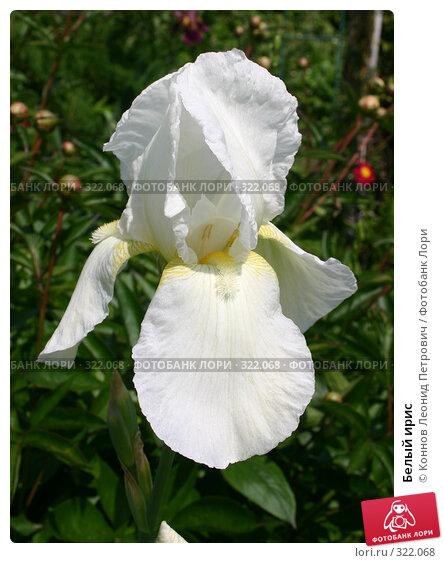 Белый ирис, фото № 322068, снято 14 июня 2008 г. (c) Коннов Леонид Петрович / Фотобанк Лори