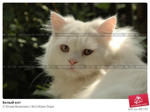 Белый кот, фото № 95172, снято 9 августа 2006 г. (c) Юлия Яковлева / Фотобанк Лори