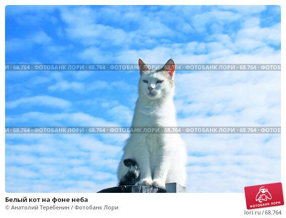 Белый кот на фоне неба, фото № 68764, снято 1 июля 2007 г. (c) Анатолий Теребенин / Фотобанк Лори