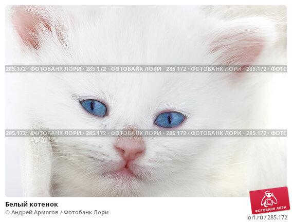 Купить «Белый котенок», фото № 285172, снято 26 марта 2007 г. (c) Андрей Армягов / Фотобанк Лори