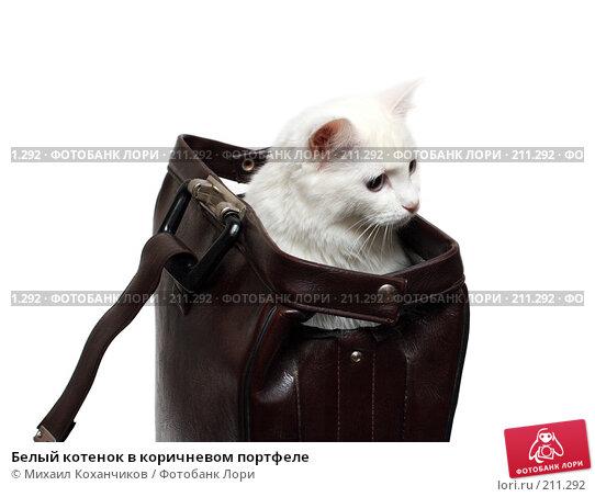 Белый котенок в коричневом портфеле, фото № 211292, снято 13 января 2008 г. (c) Михаил Коханчиков / Фотобанк Лори