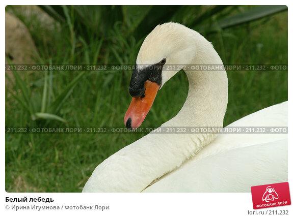 Белый лебедь, фото № 211232, снято 9 июня 2006 г. (c) Ирина Игумнова / Фотобанк Лори