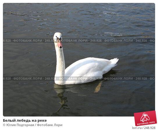 Белый лебедь на реке, фото № 248928, снято 20 марта 2008 г. (c) Юлия Селезнева / Фотобанк Лори