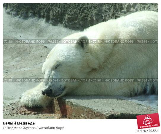 Белый медведь, фото № 70584, снято 1 мая 2007 г. (c) Людмила Жукова / Фотобанк Лори