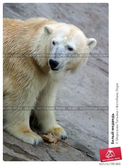 Белый медведь, фото № 98460, снято 29 апреля 2004 г. (c) Морозова Татьяна / Фотобанк Лори