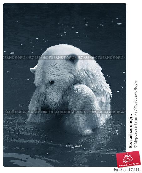 Белый медведь, фото № 137488, снято 31 марта 2007 г. (c) Морозова Татьяна / Фотобанк Лори