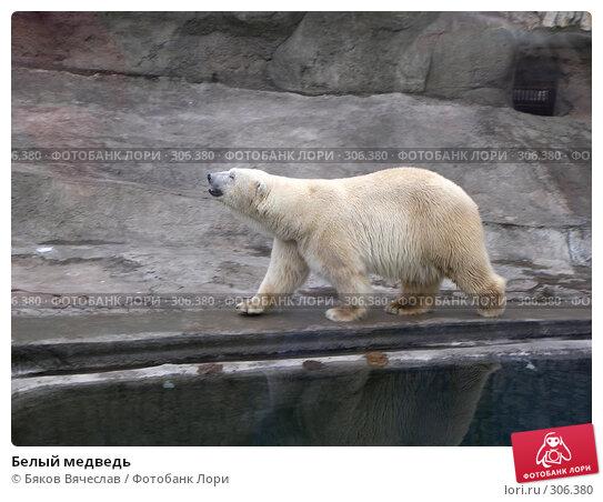 Купить «Белый медведь», фото № 306380, снято 16 апреля 2008 г. (c) Бяков Вячеслав / Фотобанк Лори
