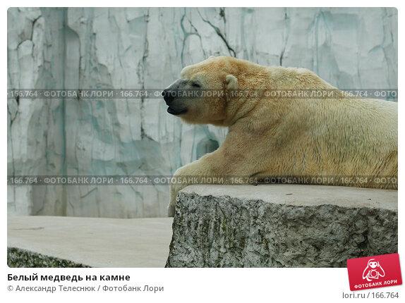 Белый медведь на камне, фото № 166764, снято 8 сентября 2007 г. (c) Александр Телеснюк / Фотобанк Лори