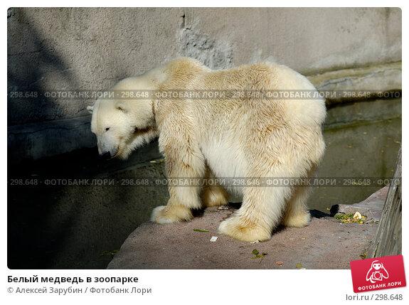 Белый медведь в зоопарке, фото № 298648, снято 22 сентября 2007 г. (c) Алексей Зарубин / Фотобанк Лори