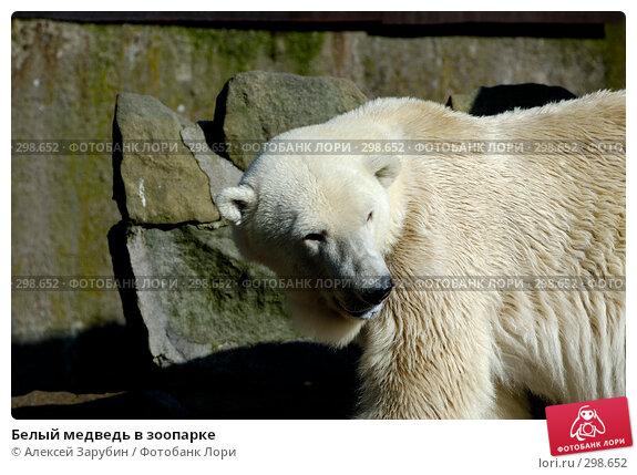 Белый медведь в зоопарке, фото № 298652, снято 22 сентября 2007 г. (c) Алексей Зарубин / Фотобанк Лори