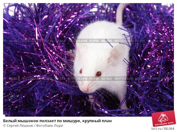 Белый мышонок ползает по мишуре, крупный план, фото № 88064, снято 23 сентября 2007 г. (c) Сергей Лешков / Фотобанк Лори