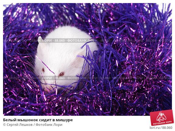 Белый мышонок сидит в мишуре, фото № 88060, снято 23 сентября 2007 г. (c) Сергей Лешков / Фотобанк Лори