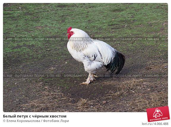 beliy-petushok-v-chernoy-pope-porno-roliki-onlayn-santehnik-trahnul-moloduyu-hozyayku