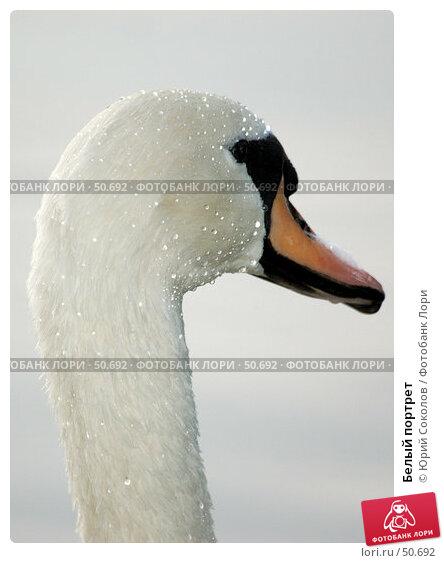 Купить «Белый портрет», фото № 50692, снято 20 сентября 2006 г. (c) Юрий Соколов / Фотобанк Лори