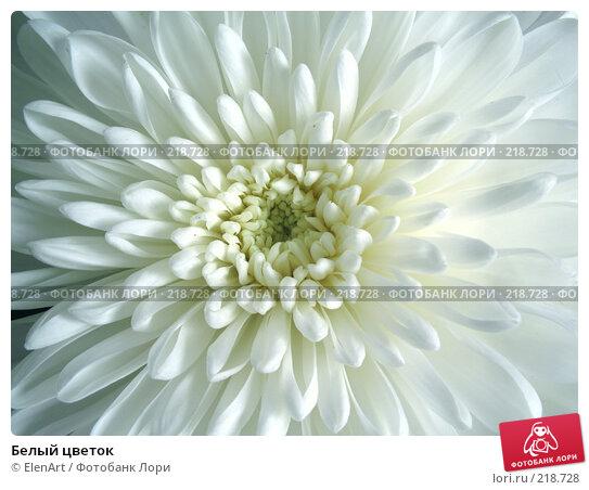 Белый цветок, фото № 218728, снято 23 сентября 2017 г. (c) ElenArt / Фотобанк Лори