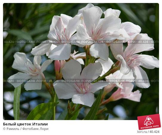 Белый цветок Италии, фото № 40424, снято 10 августа 2006 г. (c) Рамиль / Фотобанк Лори