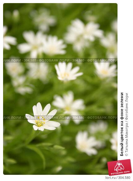 Купить «Белый цветок на фоне зелени», фото № 304580, снято 25 мая 2006 г. (c) Татьяна Макотра / Фотобанк Лори
