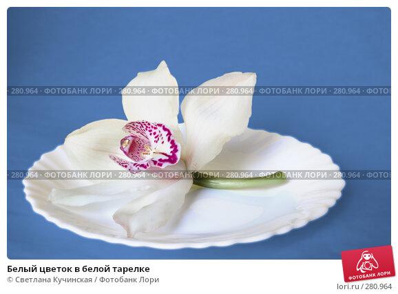 Белый цветок в белой тарелке, фото № 280964, снято 28 апреля 2017 г. (c) Светлана Кучинская / Фотобанк Лори