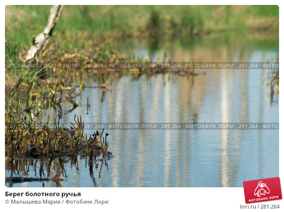 Берег болотного ручья, фото № 281264, снято 2 мая 2008 г. (c) Малышева Мария / Фотобанк Лори