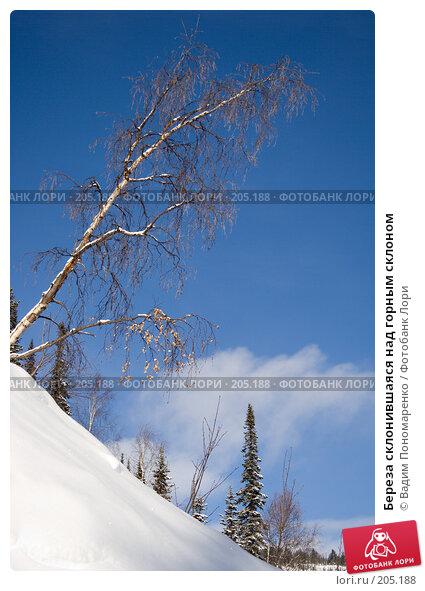 Береза склонившаяся над горным склоном, фото № 205188, снято 17 февраля 2008 г. (c) Вадим Пономаренко / Фотобанк Лори