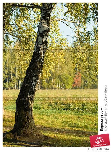 Береза утром, эксклюзивное фото № 285344, снято 22 сентября 2007 г. (c) Алексей Бок / Фотобанк Лори
