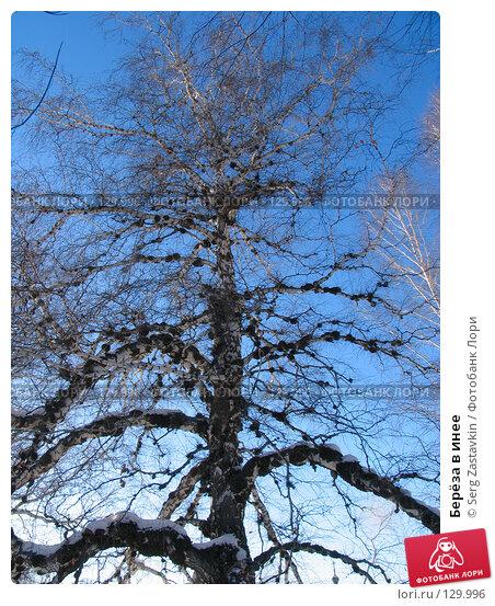 Берёза в инее, фото № 129996, снято 21 декабря 2005 г. (c) Serg Zastavkin / Фотобанк Лори