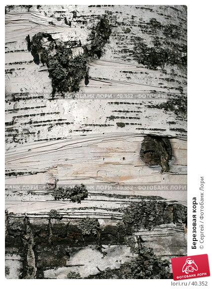 Березовая кора, фото № 40352, снято 6 мая 2007 г. (c) Сергей / Фотобанк Лори