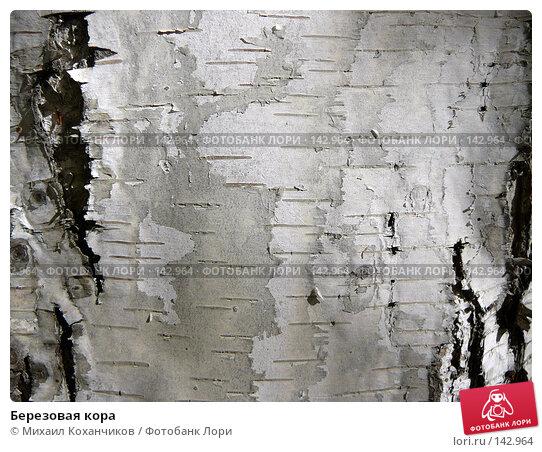 Березовая кора, фото № 142964, снято 30 сентября 2007 г. (c) Михаил Коханчиков / Фотобанк Лори