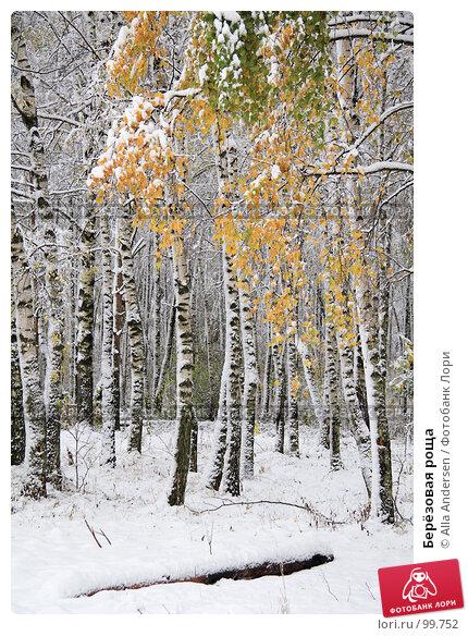 Купить «Берёзовая роща», фото № 99752, снято 16 октября 2007 г. (c) Alla Andersen / Фотобанк Лори