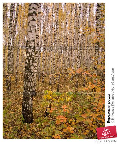 Березовая роща, фото № 172296, снято 15 октября 2007 г. (c) Вячеслав Потапов / Фотобанк Лори