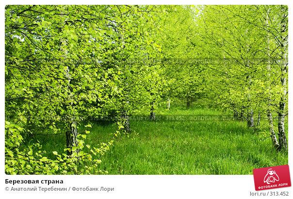 Березовая страна, фото № 313452, снято 2 мая 2008 г. (c) Анатолий Теребенин / Фотобанк Лори