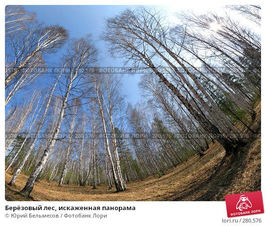 Берёзовый лес, искаженная панорама, фото № 280576, снято 4 мая 2008 г. (c) Юрий Бельмесов / Фотобанк Лори