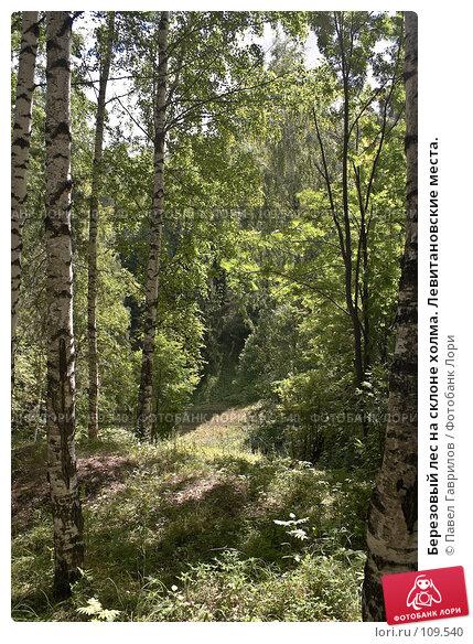 Березовый лес на склоне холма. Левитановские места., фото № 109540, снято 21 июля 2006 г. (c) Павел Гаврилов / Фотобанк Лори