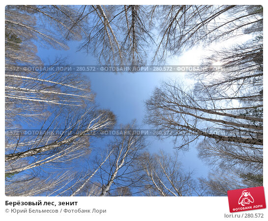 Берёзовый лес, зенит, фото № 280572, снято 4 мая 2008 г. (c) Юрий Бельмесов / Фотобанк Лори