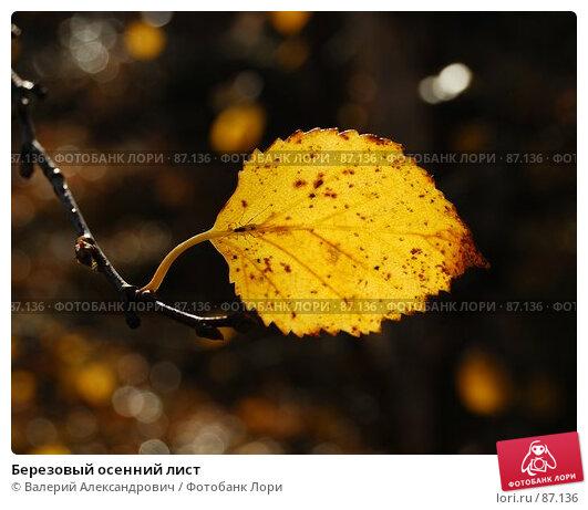 Березовый осенний лист, фото № 87136, снято 27 октября 2016 г. (c) Валерий Александрович / Фотобанк Лори