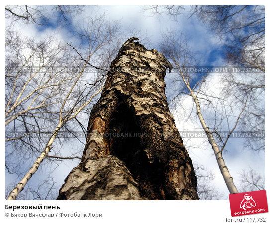 Березовый пень, фото № 117732, снято 8 апреля 2007 г. (c) Бяков Вячеслав / Фотобанк Лори