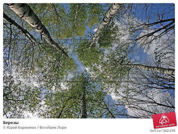 Березы, фото № 262676, снято 19 апреля 2008 г. (c) Юрий Борисенко / Фотобанк Лори
