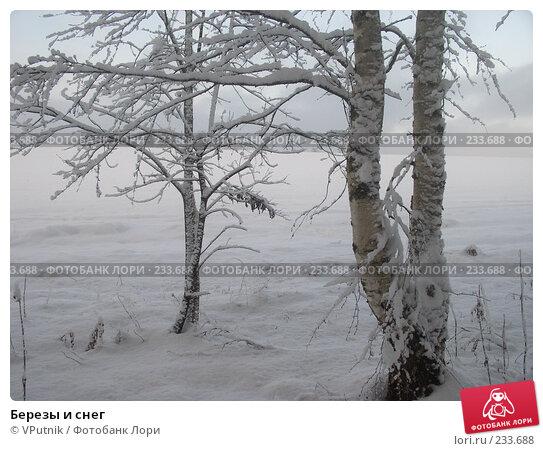 Березы и снег, фото № 233688, снято 27 февраля 2017 г. (c) VPutnik / Фотобанк Лори