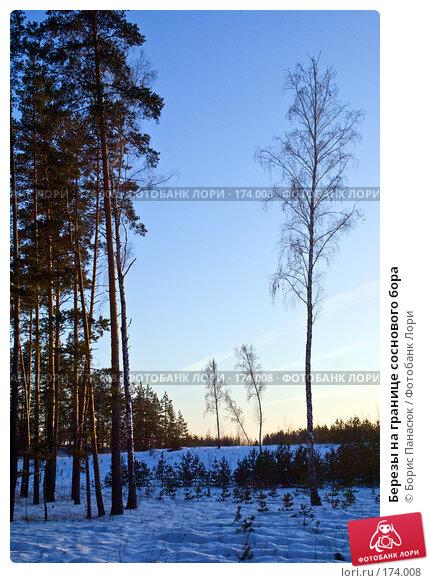 Березы на границе соснового бора, фото № 174008, снято 31 декабря 2007 г. (c) Борис Панасюк / Фотобанк Лори