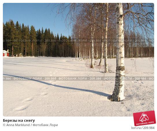 Березы на снегу, фото № 209984, снято 17 февраля 2008 г. (c) Anna Marklund / Фотобанк Лори
