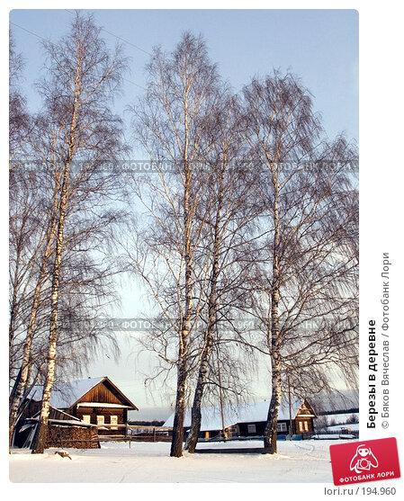 Березы в деревне, фото № 194960, снято 3 января 2008 г. (c) Бяков Вячеслав / Фотобанк Лори