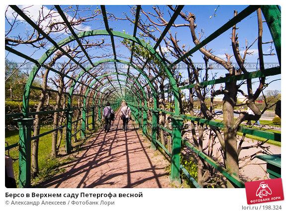 Берсо в Верхнем саду Петергофа весной, эксклюзивное фото № 198324, снято 18 мая 2007 г. (c) Александр Алексеев / Фотобанк Лори
