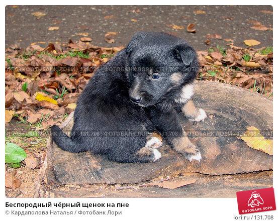 Беспородный чёрный щенок на пне, фото № 131708, снято 20 октября 2007 г. (c) Кардаполова Наталья / Фотобанк Лори