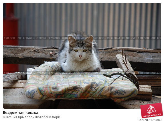 Бездомная кошка, фото № 178880, снято 7 сентября 2007 г. (c) Ксения Крылова / Фотобанк Лори